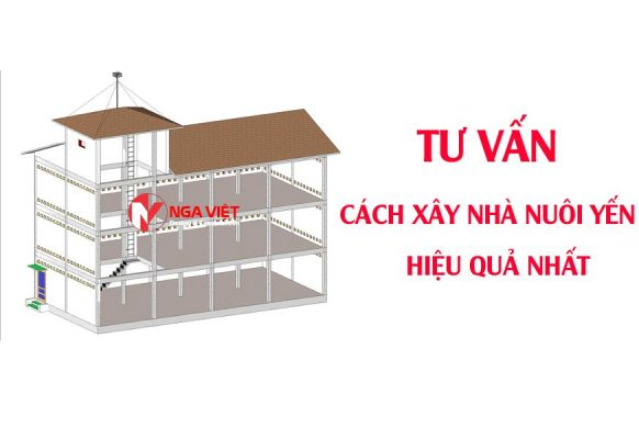 Tư vấn cách xây nhà nuôi yến hiệu quả nhất